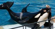 گوشت نهنگ ؛ خواص و طعم خوردن گوشت نهنگ
