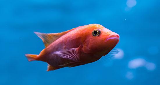 تعبیر خواب ماهی آکواریوم و زینتی و شکستن آکواریم شکسته و خالی در خواب
