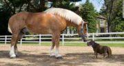 شعر در مورد اسب ؛ کپشن زیبا در مورد اسب و کبوتر قهوه ای و سخنان بزرگان