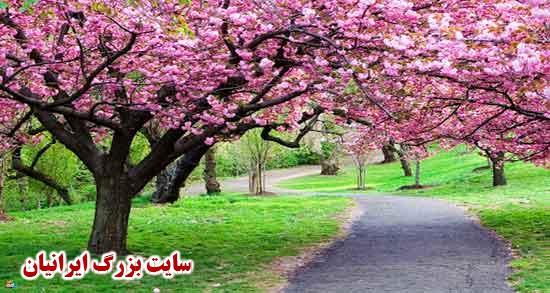 شعر در مورد بهار ؛ یک بیت شعر در مورد بهار از سعدی و دوبیتی در مورد بهار
