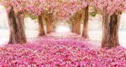 شعر دوبیتی در مورد بهار ؛ از حافظ و سعدی و سهراب سپهری و فاضل نظری