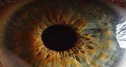 شعر در مورد چشم ؛ شعر مولانا درباره چشم قهوه ای از شاملو و سعدی و حافظ