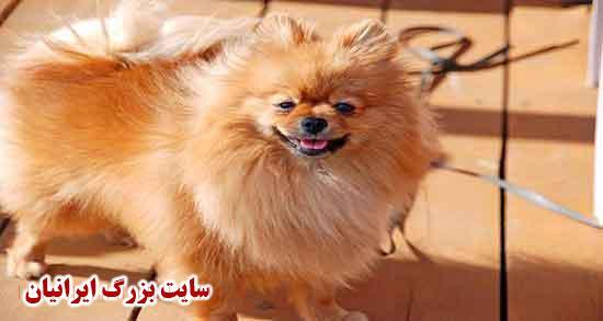 خواص گوشت سگ ؛ مزه و رنگ و بوی گوشت سگ و خواص خوردن آن چیست