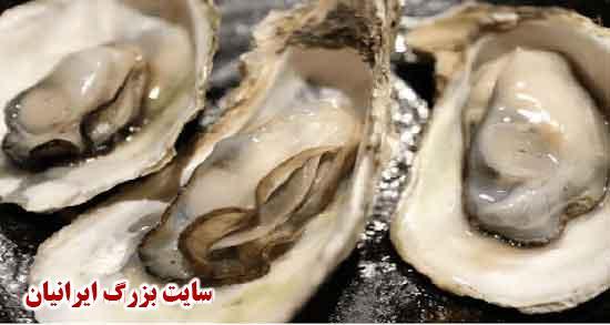 خواص گوشت صدف ، خواص سنگ صدف دریایی و خوراکی برای پوست صورت