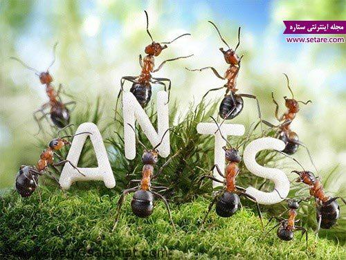 خواص روغن مورچه ؛ برای نوزاد و صورت و اقایان و تشخیص روغن مورچه اصل